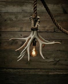 Cabin Lit Chandelier: upcycled shed antlers by Moon Stone Fox Moon Stone Fox, an upcycling shop on Etsy, created this unique lamp called 'Cabin Lit Chandelier'. Its made out of 3 Grade A shed antlers. Deer Horns Decor, Deer Decor, Deer Hunting Decor, Cow Skull Decor, Antler Lights, Antler Art, Deer Antler Crafts, Cabin Lighting, Lighting Ideas