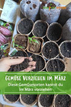 Vegetables prefer in March - Modern Garden Types, Love Garden, Garden Ideas, Types Of Vegetables, Types Of Plants, Veggies, Garden Soil, Edible Garden, Hydroponic Gardening