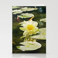 Lotus Blossom Stationery Cards by Around the Island Photography on Society6