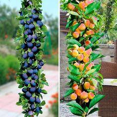 Backyard Patio Designs, Growing Plants, Garden Beds, Fruit, Gardening, Foods, Garden, Farm Gate, Life