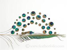 Feather Artistry ~ by Chris Maynard .
