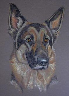 Pastel Portrait of German Shepherd Dog GSD - Kublai