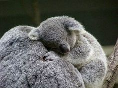 My favorite animal. Someday I would love to hold one!!