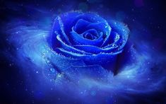 The blue rose is a flower that seeks to convey a message of mystery, enchantment and a sense of the impossible. Description from desktopnexus.com. I searched for this on bing.com/images