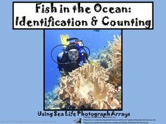 Fish in the Ocean: Counting and Arrays of Sea Life Photographs from TiePlay Educational Resources LLC on TeachersNotebook.com -  (37 pages)  - Fish in the Ocean: Counting and Arrays of Sea Life Photographs for counting 1-10. 37 pages with Emperor Angelfish, Black- tipped Sharks, Blue Hippo Tang and other ocean fish to count.