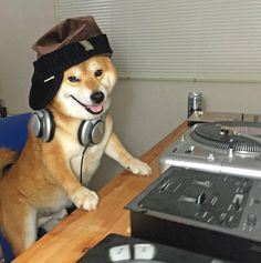 Shiba Inu Berry knows how to mix it up! Shiba Inu, Animals And Pets, Funny Animals, Cute Animals, Funny Dogs, Cute Dogs, Animal Captions, Japanese Dogs, Akita Dog