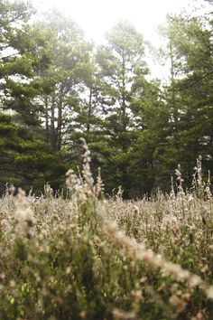 Free stock photo of nature, forest, grass, meadow