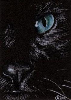 Black Cat 151