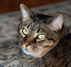 My Cat Tucker - http://www.1pic4u.com/blog/2014/09/11/my-cat-tucker/