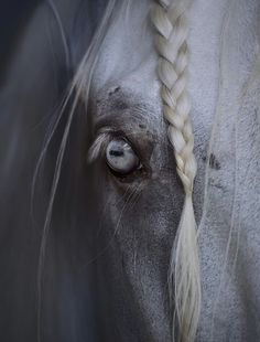 horse, blue, and eye image