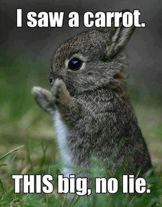 Funny Bunny rabbit, It was THIS big