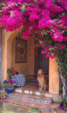 Beautiful bougainvillea in Spanish garden - venue inspiration Spanish Style Homes, Spanish House, Spanish Revival, Spanish Garden, Spanish Tile, Spanish Backyard, Spanish Colonial Homes, Diy Garden, Home And Garden