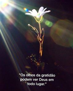 Jesus Peace, Jesus Faith, Faith In God, God's Wisdom, Jesus Freak, God Is Good, Self Help, Psalms, Bible Verses