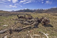 The charred skeleton from the Tibetan sky burial