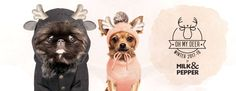 Nouvelle collection de vêtements pour chiens Milk & Pepper Hiver 2017-2018 Milk And Pepper, Deer, Teddy Bear, Stuffed Peppers, Poster, Animals, Dog Cat, Wild Life, Dogs