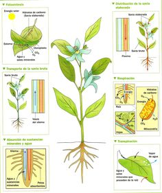 Plant Science, Science And Nature, Trees To Plant, Plant Leaves, Skin Structure, Physiology, Study Tips, Botany, Ecology
