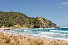 Bus Tours to Cape Reinga & Ninety Mile Beach from Kaitaia. a scenic trip to the top of the North Island. Toboggan giant sand dunes at Te Paki, buried kauri tree's Kauri Tree, Dune, Lighthouse, New Zealand, How To Memorize Things, Spiritual, Join, Tours, Island