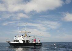 Fly Fishing for Sailfish >-<>