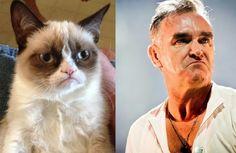 #GrumpyCat #GrumpyMoz #Morrissey I do rather think the cat is cute though....lol