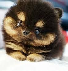 The furriest puppy ever!!!!!! So cute