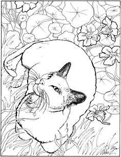 Cat Coloring Pages | Cats Coloring pages |Kitten Coloring pages ... | 306x236
