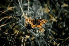 Survey shows that youngsters want to get more involved in nature – give them what they want with a glamping holiday this summer! Free Pictures, Free Images, The Last Judgment, Art Of Letting Go, Flora, Fotografia Macro, Beautiful Color Combinations, Butterfly Wallpaper, Artist At Work