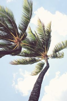 Palms swaying in the warm breeze...