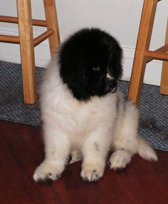 Trixie at 6wks old.....