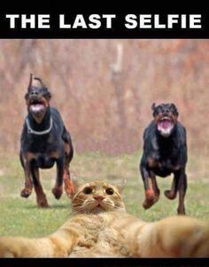 Selfie Estremi: panico felino