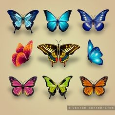 Excellent collection of butterflies Vector 3d Butterfly Tattoo, Butterfly Drawing, Butterfly Painting, Butterfly Crafts, Butterfly Wings, Body Art Tattoos, Tatoos, Art Papillon, Butterfly Pictures