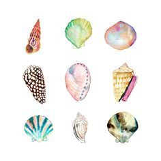 Sea Shell Collection Watercolor Print.  Beach by SnoogsAndWilde, $34.00