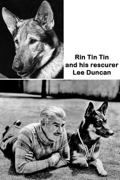 """Rin Tin Tin (Sept. 1918 – Aug. 1932) was a male German Shepherd rescued from a World War I battlefield by an American soldier, Lee Duncan, who nicknamed him """"Rinty"""". Duncan trained Rin Tin Tin (often hyphenated as Rin-Tin-Tin) & got silent film work for the dog. Rin Tin Tin was an immediate box office success & appeared in 27 Hollywood films, gaining worldwide fame. Rin Tin Tin was responsible for greatly increasing the popularity of German Shepherds as family pets."""