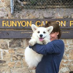 Winston the White Corgi Hiked photo Cute Corgi, Corgi Dog, Cute Dogs And Puppies, I Love Dogs, Animals And Pets, Cute Animals, Corgi Pictures, Buy A Dog, Paws And Claws