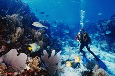 Scuba diving Belize .. Been there done that ! Most beautiful place on earth ..