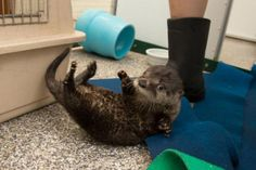 Help Name the Oregon Zoo's Rescued Otter Pup!