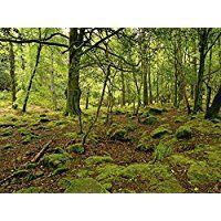 Artland Echt-Glas-Wandbild Deco Glass Andrea Potratz Natur pur Landschaften Wald Fotografie Grün 60 x 80 x 1,1 cm