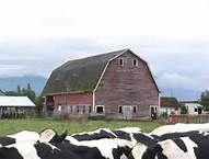 Circa 1920  Eagle Mills Farm, Whatcom County, WA