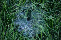 20 Fun Spider Facts for Preschoolers from Preschool Inspirations http://preschoolinspirations.com/2013/10/18/20-fun-spider-facts-for-preschoolers/