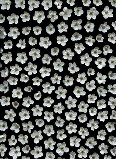 floral design, Background, art, pattern, b&w, flowers
