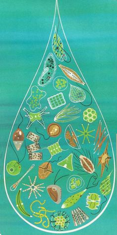 Charley Harper, water drop illustration in The Giant Golden Book of Biology, 1961 Charley Harper, Science Illustration, Nature Illustrations, Gravure, Wildlife, Artsy, Quilts, Applique, Drawings