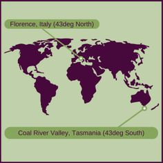 #olives grow in Tasmania, Australia