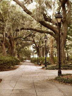 Forsyth Park Savannah, GA  I love Spanish moss