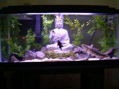 zen aquarium - Google Search