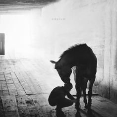Just a girl and her horse....
