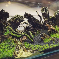 """""""Details: tank by Stu Worral A new picture of some of the details from Stu Worral's new scape. Enjoy!"""""""