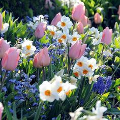 Spring flowering bulbs (tulips and daffodils)