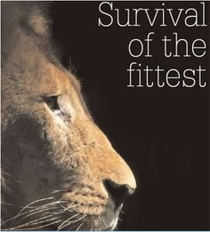 Loud roars to my friend and client Colby Devitt for sharing Linda Bender's lion wisdom with me. Roar on Lion http://tny.cz/34cd2c2b Like Linda on Facebook: https://www.facebook.com/lindabenderdvm to follow her amazing encounters with animals.