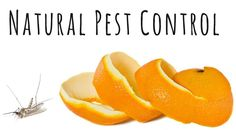 31 Natural Pest Control Methods! | One Good Thing By Jillee