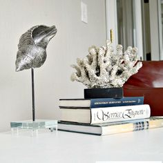 Seashells, Coral & Driftwood on Pedestal Stands
