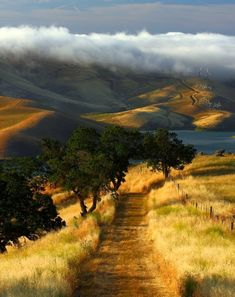 California beautiful. The oak lined windy road and the fog seeping through the golden hills.